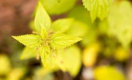 在草的绿色叶子在秋天 免版税库存照片