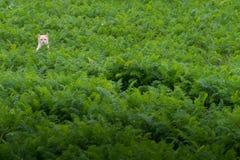在草的美丽的猫 免版税库存照片