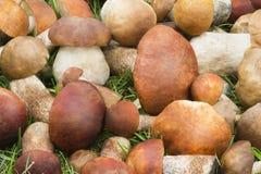 在草的美丽的蘑菇在森林里。 免版税库存图片