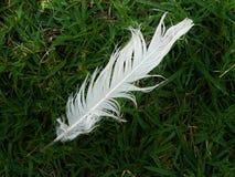 在草的羽毛 免版税库存图片