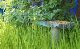 在草的老长木凳 免版税库存图片