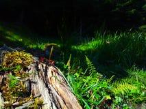 在草的腐烂的树 免版税库存图片