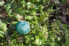在草的自然矿物石蓝绿色宝石 免版税库存照片