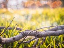 在草的草和秀丽的分支 图库摄影