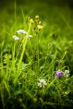 在草的草甸花 免版税库存照片