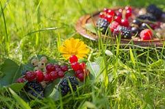 在草的莓果 免版税库存图片