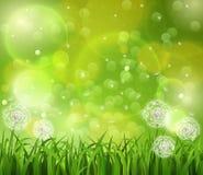 在草的蒲公英在绿色背景 库存照片