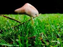 在草的蘑菇 库存图片