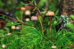 在草的蘑菇 免版税库存图片
