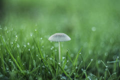 在草的蘑菇 免版税库存照片