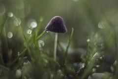 在草的蘑菇 免版税图库摄影