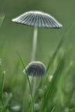 在草的蘑菇 库存照片