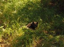 在草的虎斑猫 免版税库存图片