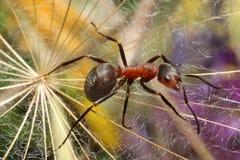 在草的蚂蚁 库存图片