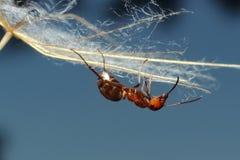 在草的蚂蚁 图库摄影