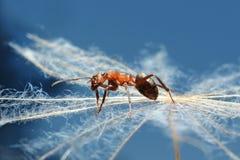 在草的蚂蚁 免版税库存图片