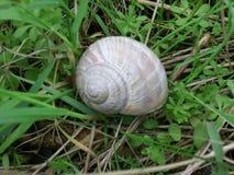 在草的蜗牛壳在春天 免版税图库摄影
