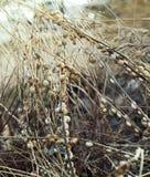 在草的蜗牛 免版税图库摄影