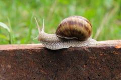 在草的蜗牛 图库摄影