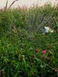 在草的蜘蛛网 库存照片