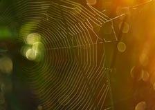在草的蜘蛛网 免版税图库摄影