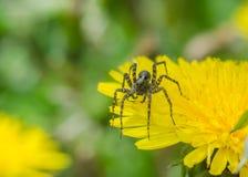 在草的蜘蛛 库存图片