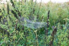 在草的蜘蛛` s网 库存照片