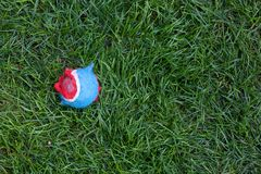 在草的被撕碎的红色和蓝色网球 免版税库存图片