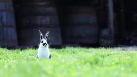 在草的谨慎小兔 免版税库存图片