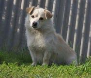 在草的逗人喜爱的小狗 图库摄影