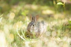 在草的逗人喜爱的小的复活节兔子 库存图片