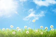 在草的逗人喜爱的雏菊与蓝天和云彩和lensflare 免版税库存照片
