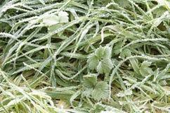 在草的釉冰 库存照片