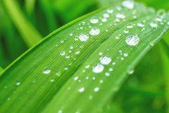 在草的雨下落 免版税库存照片