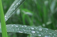 在草的雨珠 库存照片