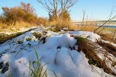 在草的雪在降雪以后 库存图片