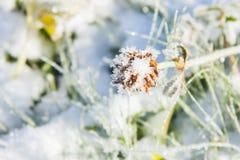 在草的雪 免版税库存照片