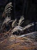 在草的霜 免版税库存照片