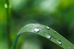 在草的露水滴水 库存照片