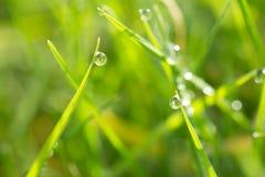 在草的露水 免版税库存图片