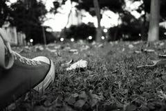 在草的鞋子 免版税图库摄影