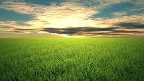 在草的飞行,日落, cloudscape 股票录像