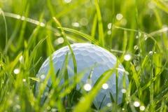 在草的高尔夫球与bokeh 库存图片