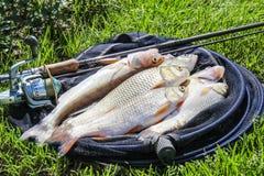 在草的鱼捕获 库存照片