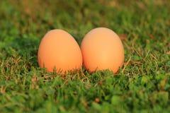 在草的鸡蛋 免版税库存照片
