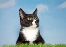 在草的黑白小猫 免版税图库摄影