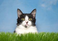 在草的黑白小猫 库存图片