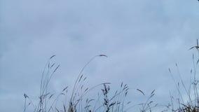 在草的阴云密布 日落 时间间隔 4K 股票视频