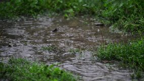 在草的水坑在雨特写镜头 影视素材
