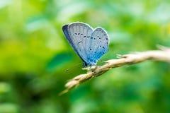 在草的蝴蝶 免版税图库摄影